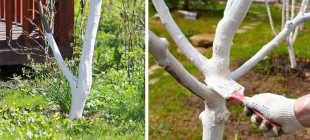 Нужно ли белить деревья: зачем белят и как?